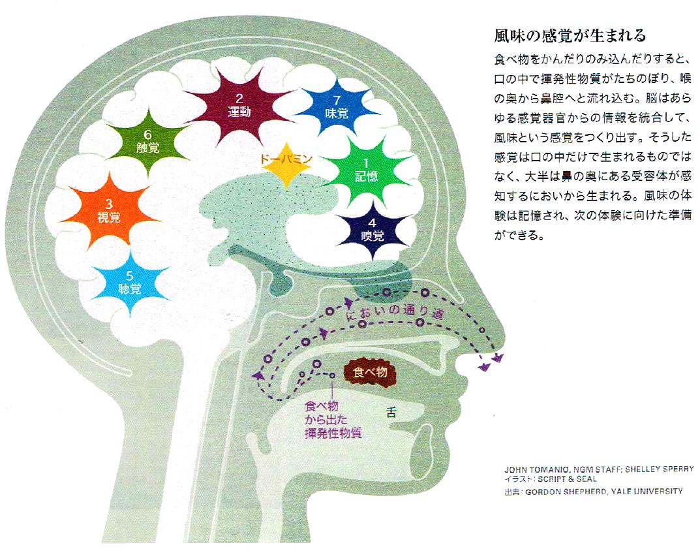 味覚の脳科学「おいしいと感じる仕組み」