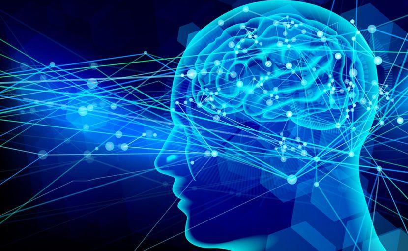 「神経神話」:右脳型人間、左脳型人間の幻想